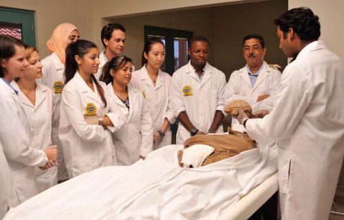 Medical School Cadaver Lab