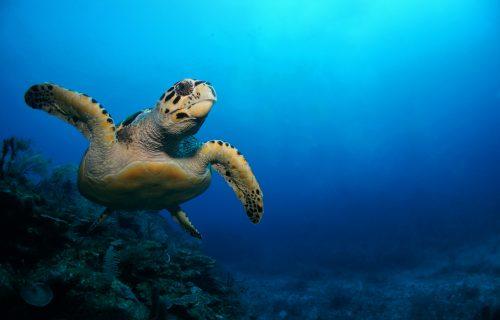 caribbean med school blog: Viewing the Ocean Through A Different Lens
